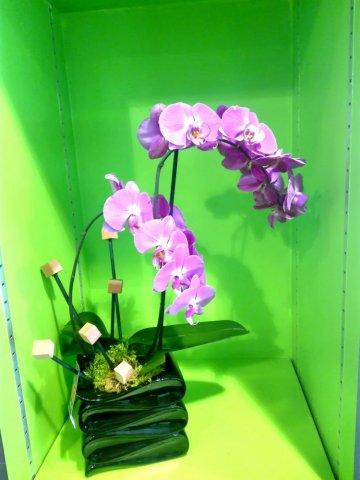 Acheter orchidée avec cache pot plante