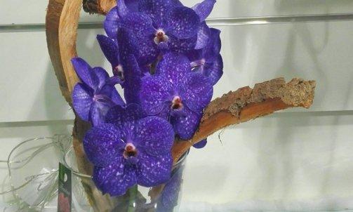 Composition fleurs couée orchidée wanda