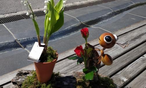 Composition Fleurs Coupées et Plante