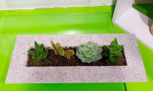 Plantes Fleuries et Plantes Vertes fleuriste composition