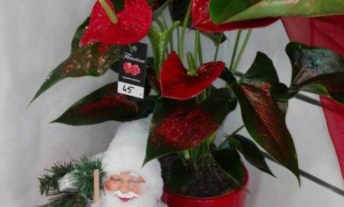 Composition florale Noël